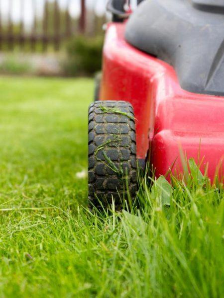 Grass Cut